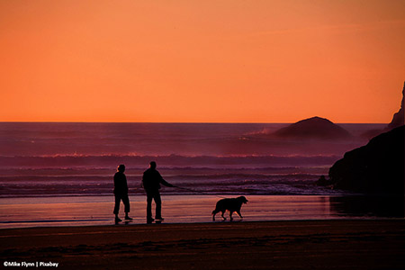 Older couple with dog walking on teh beach at sunset